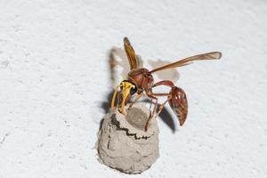vespa su un muro bianco foto