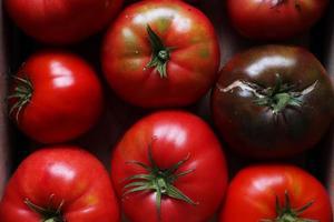 primo piano di pomodori foto