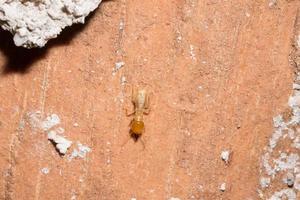 termite su un registro