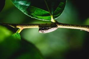 insetto su un ramo foto