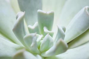 primo piano verde del cactus