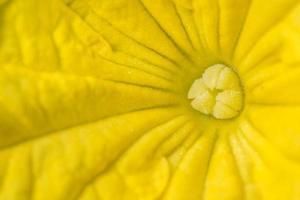 macro fiore giallo foto