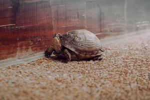 tartaruga marrone sulla sabbia marrone durante il giorno