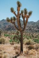 albero marrone sul campo di erba marrone durante il giorno foto