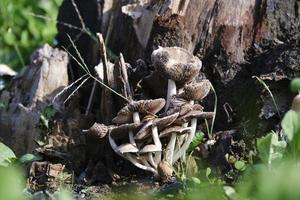 messa a fuoco selettiva colpo di funghi nella foresta foto