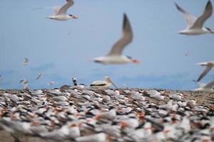 Stormo di uccelli