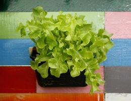 pianta verde in vaso foto
