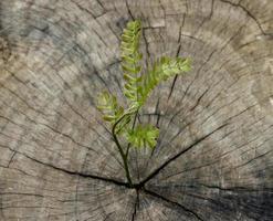 pianta che cresce dal ceppo
