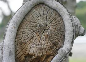anelli di alberi secchi