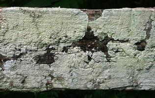 vecchia corteccia d'albero con muffa foto