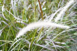 pianta di prato fiorito foto
