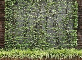 muro di cemento con foglie verdi foto