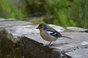 simpatico uccellino nella foresta