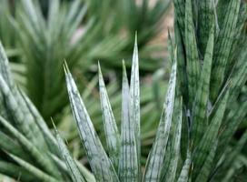 primo piano di una pianta appuntita foto