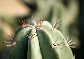 stretta di cactus foto