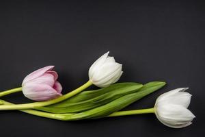 vista dall'alto di tulipani di colore bianco e rosa isolato su sfondo nero con spazio di copia