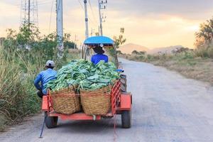 Il veicolo e-taen o il trattore agricolo raccolgono le verdure del cavolfiore nella fattoria biologica verde, Tailandia foto