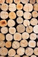 primo piano rotondo tagliato sezione tronco albero con anelli annuali modello struttura in legno, parete decorata con abbattuto un albero