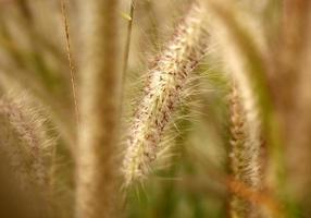 primo piano di erba selvatica