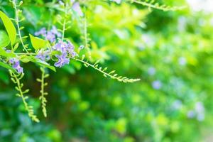 sfondo di fiori naturali