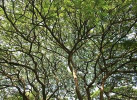albero verde durante il giorno foto