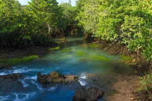 fiume e foresta con cielo blu nuvoloso foto