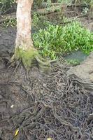 albero e radici nella foresta