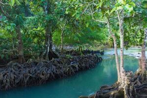 fiume e foresta foto