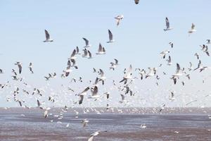 gabbiani al mare