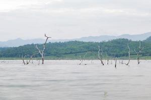 alberi secchi nel lago
