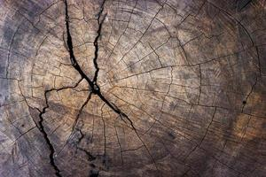 primo piano del ceppo di albero per la trama e lo sfondo