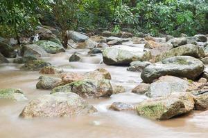 fiume nella giungla foto