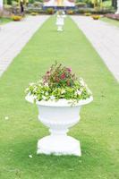 piante in vaso sull'erba foto