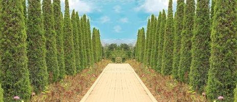 percorso in giardino foto