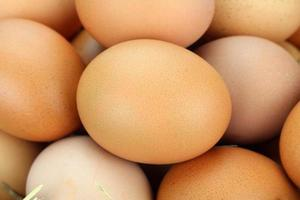 uova di gallina marroni foto