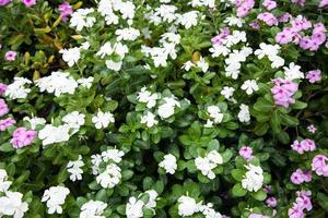 giardino fiorito in thailandia