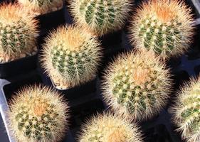 primo piano di piante di cactus foto