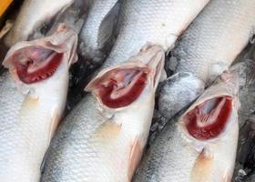 primo piano di pesce fresco foto