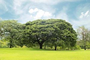 alberi verdi e prato foto