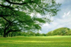sfondo sfocato del parco