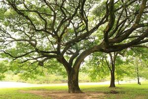 alberi in un parco foto