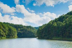 foresta e bacino idrico in Tailandia