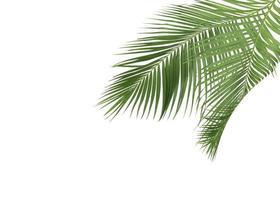 foglie tropicali verdi