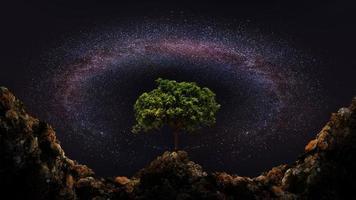 albero e via lattea