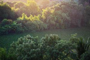 luce solare sugli alberi foto