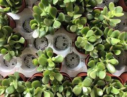 vista dall'alto di piante grasse in vaso