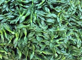piccole foglie verdi