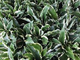 mazzo di foglie verdi all'esterno