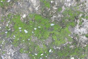 muschio su cemento grigio foto