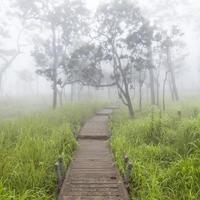 passerella in legno nella foresta